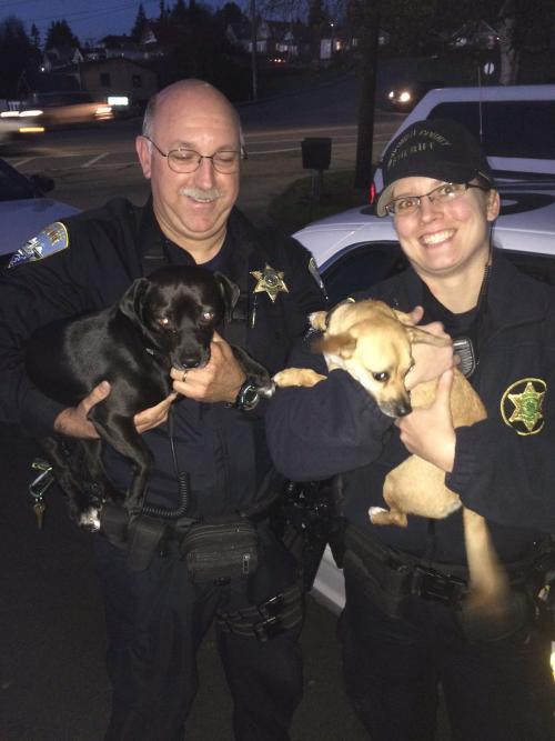Police Officers Holding Dogs
